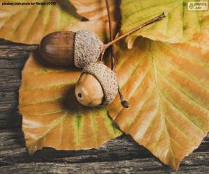 Układanka Dwa żołędzie i jesienne liście