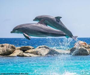 Układanka Dwa delfiny skoków