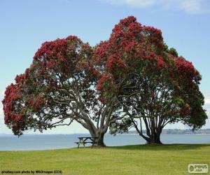 Układanka Dwa drzewa