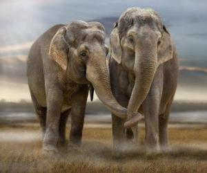 Układanka Dwa duże słonie z splecione pnie
