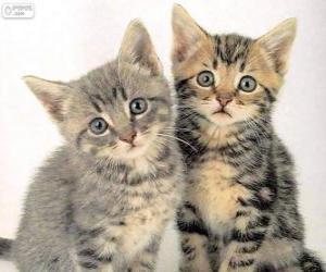 Układanka Dwa kociaki
