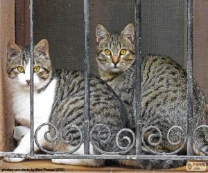 Układanka Dwa koty w oknie