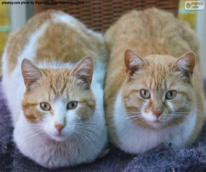 Układanka Dwa koty