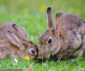 Układanka Dwa króliki, jedzenie