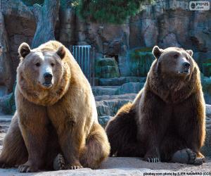 Układanka Dwa niedźwiedzie brunatne