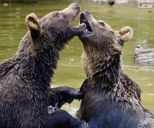 Układanka Dwa niedźwiedzie w wodzie