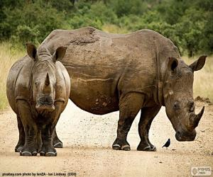 Układanka Dwa nosorożce