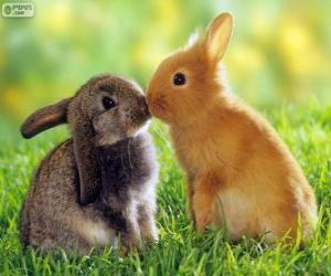 Układanka Dwa piękne króliki twarzą w twarz