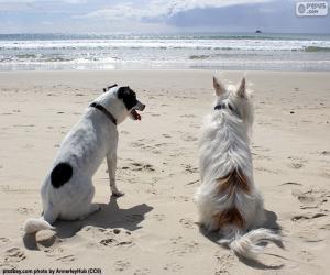 Układanka Dwa psy na plaży