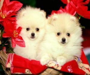 Układanka dwa psy obok roślin Boże Narodzenie