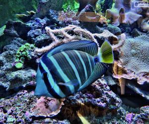Układanka Egzotyczne ryby