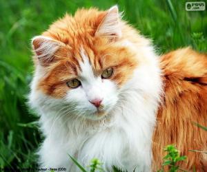 Układanka Eleganckie kota