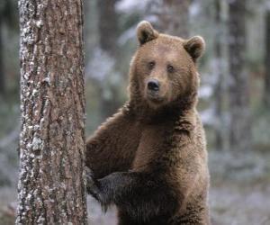Układanka Europejski brunatnych w pryszczycy spoczywającej na drzewie