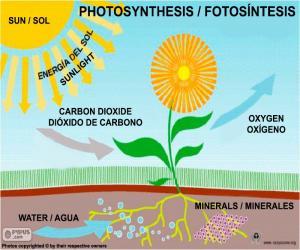 Układanka Fotosynteza