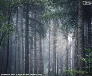 Układanka Gęsty las
