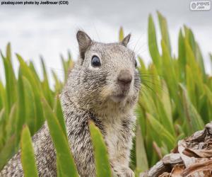 Układanka Głowica z wiewiórka