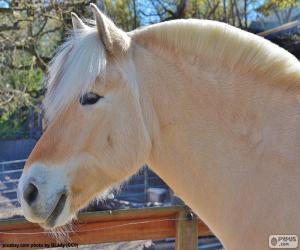 Układanka Głowa konia beżowy