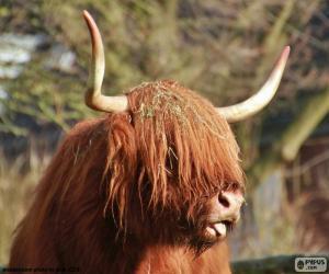 Układanka Głowy szkocka rasa wyżynna