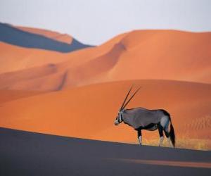Układanka Gazela Granta z długimi rogami w wydmy pustyni