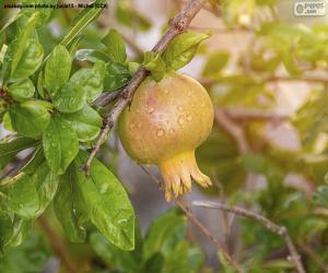 Układanka Granat w drzewie