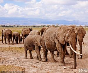 Układanka Grupa słoni