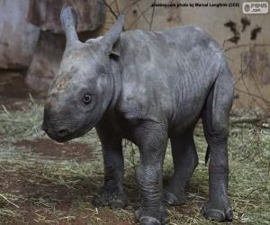 Układanka Hodowla nosorożca czarnego
