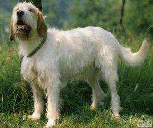 Układanka Istria Coarse długowłosy pies