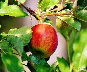 Układanka Jabłko w drzewie