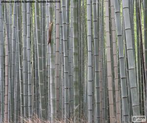 Układanka Japoński bambusowym lesie