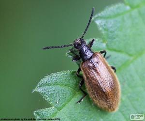 Układanka Jasny brązowy chrząszcz