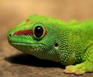 Układanka Jaszczurka zielona