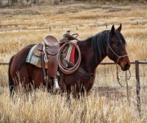 Układanka Jazda z kowbojem