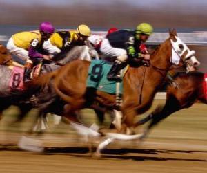 Układanka Jeździectwo - Wyścigi konne na tor wyścigowy