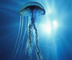 Układanka Jellyfish, galaretki lub galaretki morze z jego macki