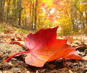 Układanka Jesień liścia