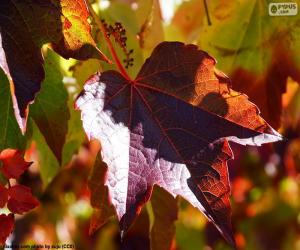 Układanka Jesień w winnicy