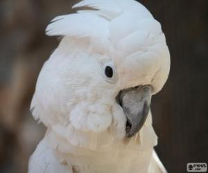 Układanka Kakadu biała