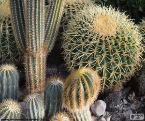 Układanka Kaktus