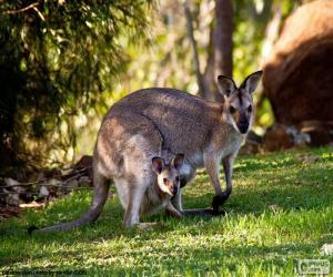 Układanka Kangur szary