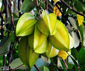 Układanka Karambola, egzotycznych owoców