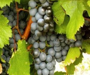 Układanka Kiść winogron