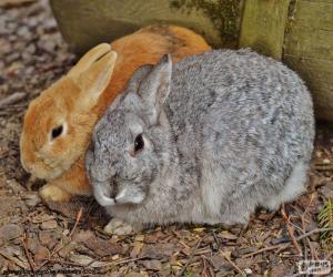 Układanka Kilka królików