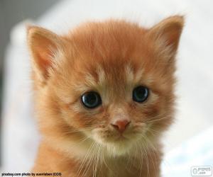 Układanka Kitten Słodkie