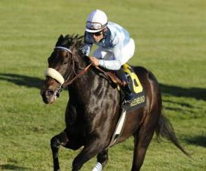 Układanka Koń i dżokej na wyścigi konne na torze wyścigowym