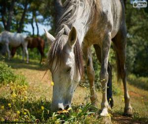 Układanka Koń pastwiskowy