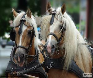 Układanka Koń zimnokrwisty