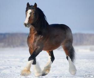 Układanka Koń włodzimierski pochodzących z Rosji