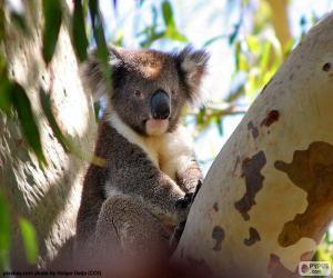Układanka Koala w drzewie