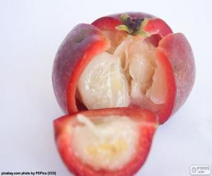Układanka Kokum owoców
