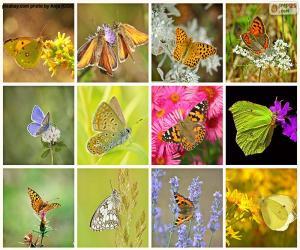Układanka Kolaż motyli